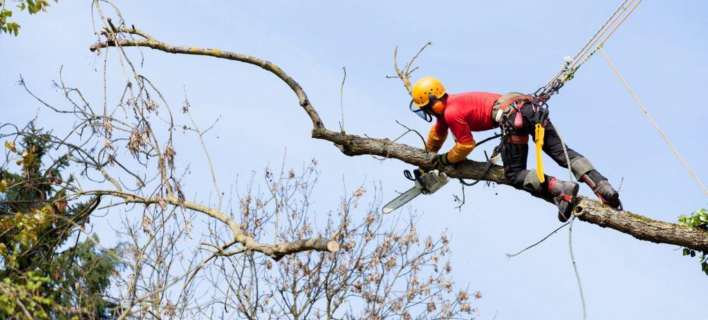 Avancerad trädfällning Danderyd