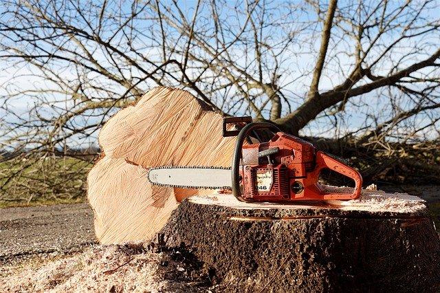 Trädfällning från mark Danderyd