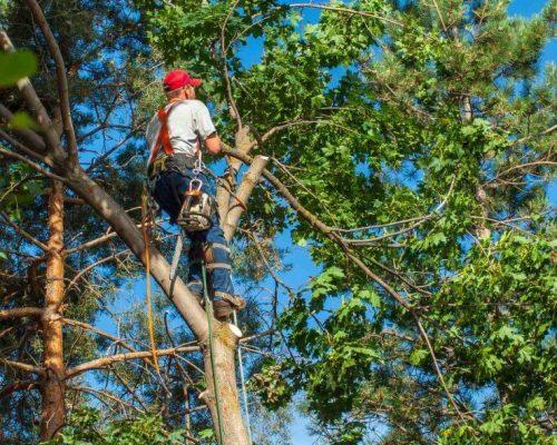 Trädfällning Danderyd